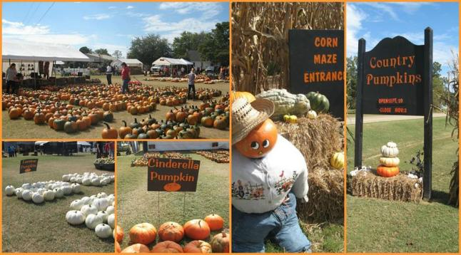 country pumpkins collage