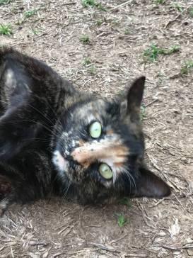 callie the cat