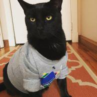 sir thomas shirt